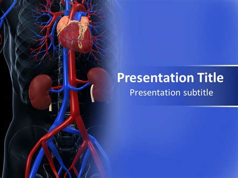cardiovascular system powerpoint template template