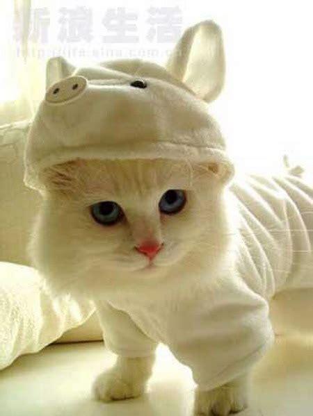 Sho Kucing Di Petshop pet shop
