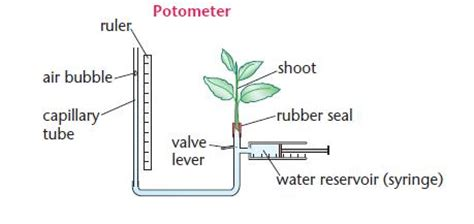 design experiment rate of transpiration the transport of substances in a plant a2 level level