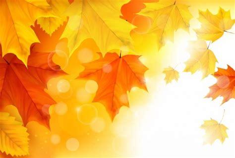 file maple leaf autumn jpg maple leaf autumn maple maple leaves background