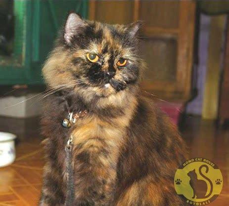 Cat Miu Miu Baju Rajut our lovely cat momo cat house boyolali