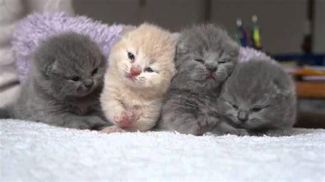 newborn kittens four cute fluffy newborn kitten youtube