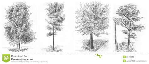 imagenes a lapiz de arboles 11 dibujos a lapiz de 225 rboles dibujos a lapiz
