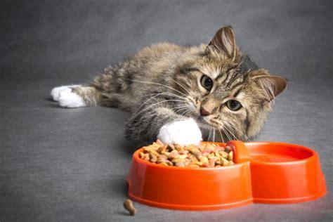 cibo a casa cibo per gatti fatto in casa non sprecare
