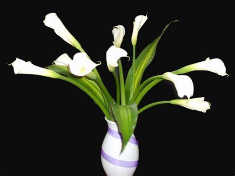 imagenes de flores alcatraces alcatraces flores pinterest