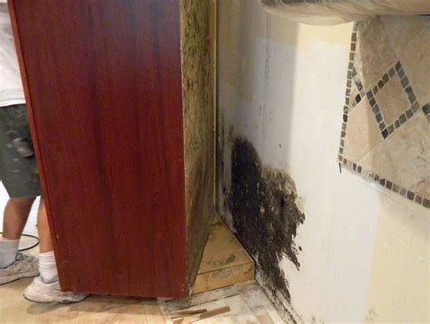 mold in drywall behind kitchen cabinets mold removal mold removal expert witness clearwater ta fl