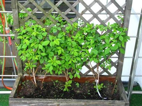Balkon Sichtschutz Pflanzen Winterhart by Sichtschutz Balkon Pflanzen Zoeken Voortuin