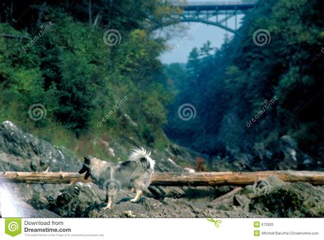 vermont puppies vermont stock photo image 672920
