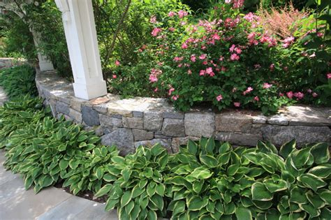 Landscape Ideas With Hostas We Like Using Hosta As A Ground Covering Traditional