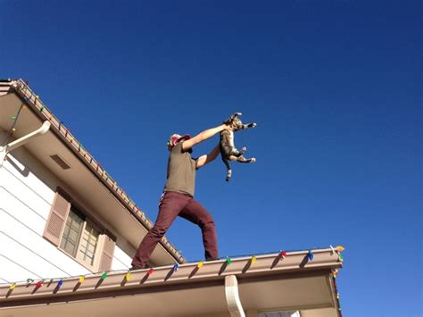 putting christmas lights on roof putting up the lights and the cat jumped on the roof so he started singing the circle