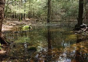 Backyard Vernal Pool Mianus River Gorge News