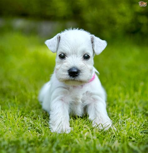 what does puppy what vitamins do puppies need to stay healthy pets4homes