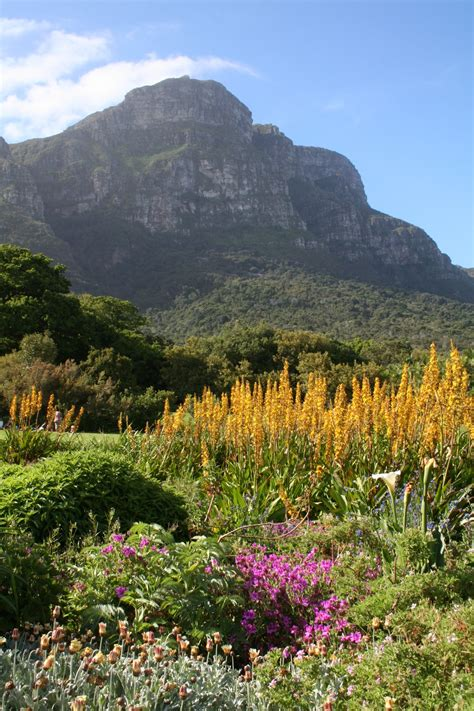 Pictures Of Kirstenbosch Botanical Gardens I Ve Been Published Picnicking In Kirstenbosch Botanical Gardens A Canadian Living In Cape Town