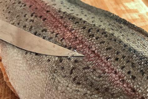 forelle schuppen welche fische muss ich schuppen und wie funktioniert s