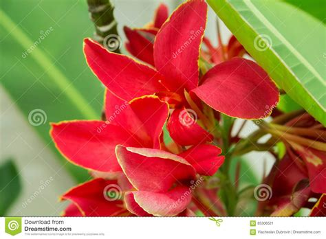 piante con fiore rosso pianta con fiore rosso fiori idea immagine
