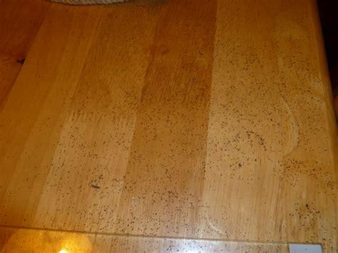 termite droppings  bed tyresc