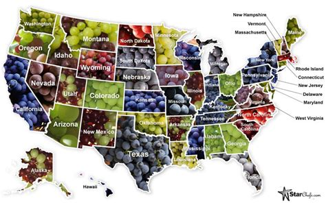 Can You Match The Wine To Its Region Of Origin by United States And Wine Regions Of United States Grape