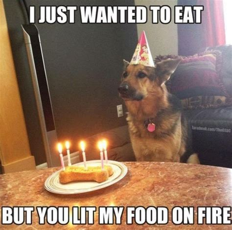 Disappointed Dog Meme - 25 best ideas about birthday meme dog on pinterest