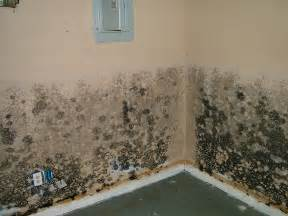 mold in homes symptoms of household mold exposure