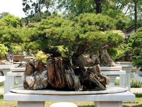 pots planters penjingbonsai stone planting tray