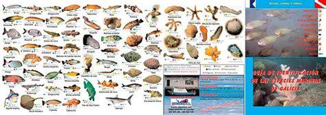 imagenes de animales marinos con sus nombres imagenes y nombres de animales marinos imagui