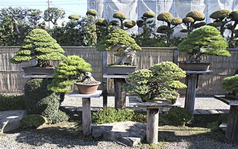 autumn 2013 japan bonsai exploration tour valavanis bonsai blog
