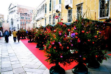panoramio photo of christmas trees in venice italy