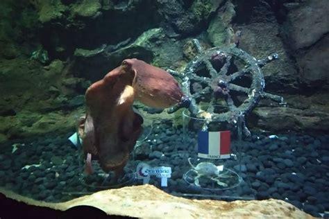 ikan  gurita  seaworld ancol prediksi hasil piala