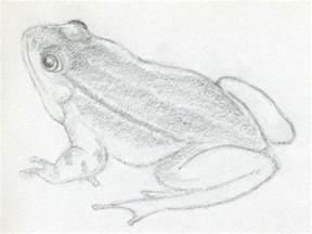 draw frog jus 4 kidz