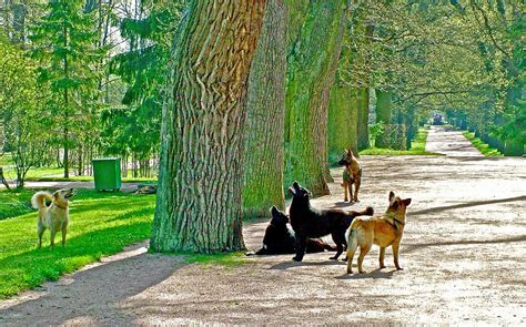 when the dogs bark treed a year on the trail of the longtails classic reprint books dogs barking up the wrong tree at catherine s palace and