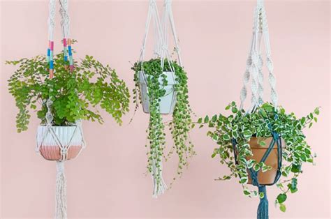 Macrame Plant - how to make a macram 233 plant hanger ftd