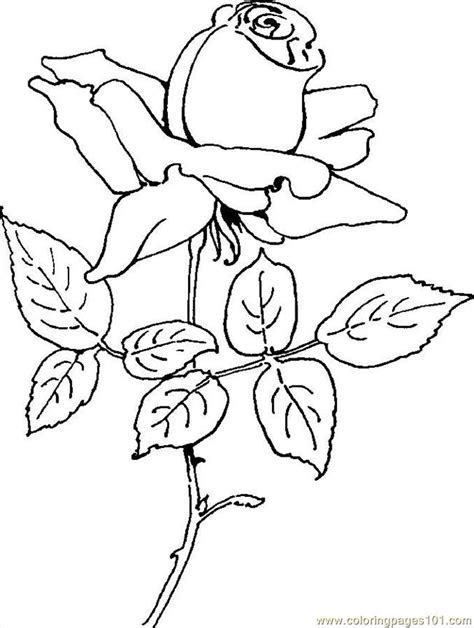 rose coloring page to print rose 05