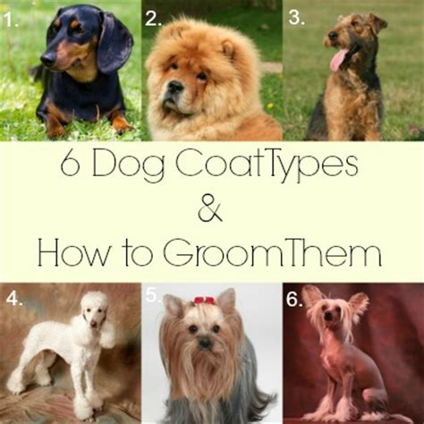 what type of is doge 6 coat types and how to groom them cowboy magic