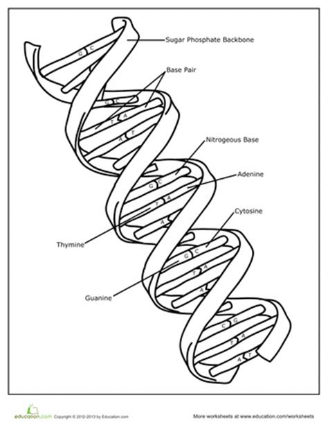 dna and rna coloring activity coloring pages