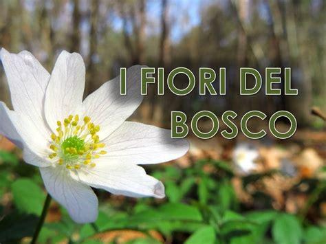 fiori bosco i fiori bosco