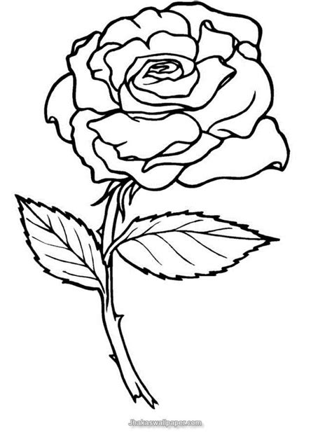 coloring pages flower rose coloring pages of roses coloring home