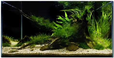 fish tank aquascape aquascape of the month november 2009 quot riverbank quot terrariums nanos pinterest