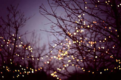 lights trees image 336523 on favim