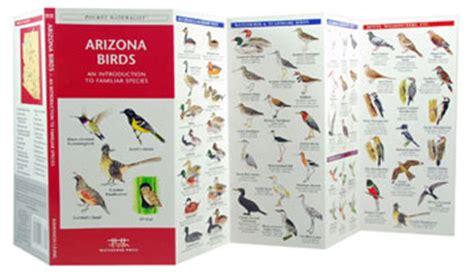birds of arizona field guide arizona bird identification