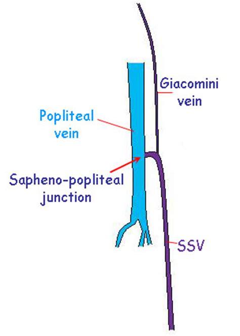 Similiar Vein Of Giacomini Anatomy Keywords