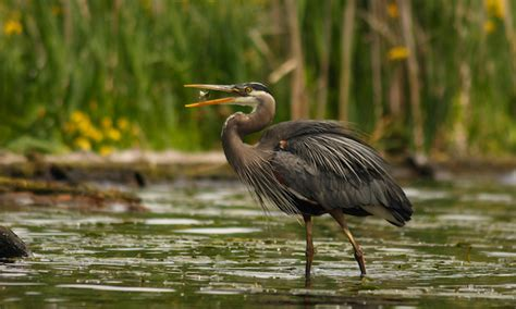 feeding wild birds wilderness awareness school