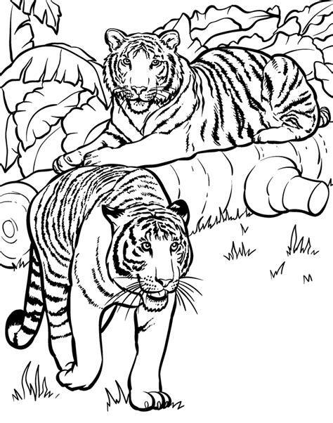 jungle animal pictures to print coloring home