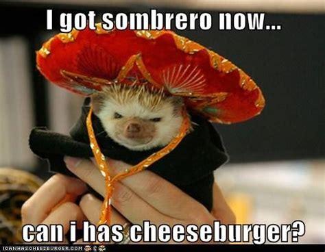 Sombrero Meme - i got sombrero now can i has cheeseburger