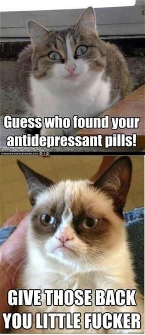 Antidepressant Meme - bwahahaha love grumpy cat
