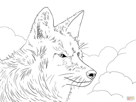 cartoon coyotes coloring page coloring pages