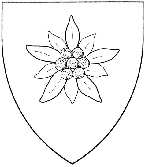 edelweiss flower coloring page edelweiss flowers drawing drawings nocturnal