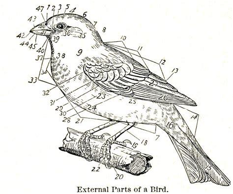 vintage diagram free vintage clip dictionary bird images the