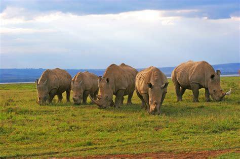 kenya wildlife safari wilderness inquiry