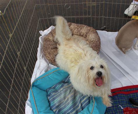 adoption utah findlay subaru hosts pet adoption event st george news