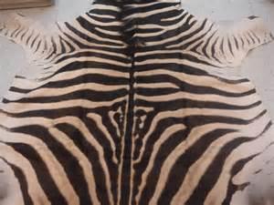 zebrafell teppich vintage zebra skin rug at 1stdibs